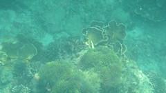 Ao Nang - Snorkelling - Coral (Paul_Jean) Tags: andamansea snorkelling aonang krabi thailand