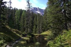 06-IMG_8375 (hemingwayfoto) Tags: österreich alpen austria baum europa fichte gletscher hochmoor hohetauern landschaft moorauge nationalpark natur naturschutzgebiet rauris rauriserurwald reise tannenbaum urwald wald weg