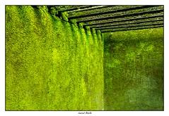Mémoire (Laurent Asselin) Tags: bagne prison grilles cellule guyane annamites mémoire horreur végatation végétation vert nature souvenir