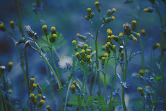 Ready for light (Giulia Gasparoni) Tags: ready light fower flowers macro beautiful beauty fragile delicate plants grass amazing awesome indie vintage retro old dream dreamy photography nature blue yellow contrast