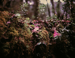 Mystic forest (suxarik) Tags: mamiya 645 6x45 120 645afd af sekor mamiyasekor mf medium mediumformat film expired e6 color fujifilm fuji velvia fujifilmvelvia100 rvp100 analog slide positive scanned imacon imaconflextightphoto nepal asia trekking