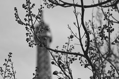 Eiffel Tower Behind Branches (ericgrhs) Tags: eiffelturm branches nature tree paris