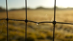 Dew (Future-Echoes) Tags: 4star 5star 2012 bokeh depthoffield dew dof drop fence web wire