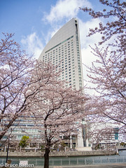 170406 Yokohama-01.jpg (Bruce Batten) Tags: trees locations kanagawa flowers plants rosaceae subjects honshu buildings atmosphericphenomena cloudssky urbanscenery japan yokohama yokohamashi kanagawaken jp