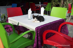 The Table is Set (farahleon) Tags: cat restaurant asilah morocco straycat