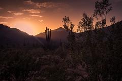 20170409-DSC_5277-Edit (lilnjn) Tags: arizona southwestunitedstates travel unitedstates whitetank