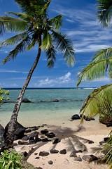 Paradise (WissPix) Tags: canon5ds kauai beach sun sand palmtree shadow ocean blue sea hawaii lavarocks blackrocks green