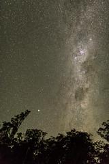 Milky Way (Eduardo_il_Magnifico) Tags: milkyway stars astronomy astrophotography night trees galaxy chapmanvalley newsouthwales nsw australia nikond750 sigma35mmf14 tripod