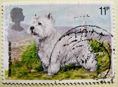 great stamp Great Britain 11p West Highland Terrier (dog, Hund, chien, koer, σκύλος, koira, kutya, perro, כלב, 狗, كلب, anjing, 개, cane, 犬, pas, suns, šuo, собака, สุนัข, hond, pies, cão, câine, köpek, пас, собака, pes, kelb) timbre UK United Kingdom stamp (stampolina, thx for sending stamps! :)) Tags: markica antspaudai маркица pulları tem perangko timbru england gb greatbritain unitedkingdom uk commonwealth grosbritannien british briefmarken スタンプ postzegel zegel zegels марки टिकटों แสตมป์ znaczki 우표 frimærker frimärken frimerker 邮票 طوابع bollo francobollo francobolli bolli postes timbres sello sellos selo selos razítka γραμματόσημα dog hund chien koer σκύλοσ koira kutya perro כלב 狗 كلب anjing 개 cane 犬 pas suns šuo собака สุนัข hond pies cão câine köpek пас pes kelb terrier westhighlandterrier white weis animal