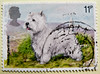 great stamp Great Britain 11p West Highland Terrier (dog, Hund, chien, koer, σκύλος, koira, kutya, perro, כלב, 狗, كلب, anjing, 개, cane, 犬, pas, suns, šuo, собака, สุนัข, hond, pies, cão, câine, köpek, пас, собака, pes, kelb) timbre UK United Kingdom stamp (stampolina, thx for sending stamps! :)) Tags: markica antspaudai маркица pulları tem perangko timbru england gb greatbritain unitedkingdom uk commonwealth grosbritannien british briefmarken スタンプ postzegel zegel zegels марки टिकटों แสตมป์ znaczki 우표 frimærker frimärken frimerker 邮票 طوابع bollo francobollo francobolli bolli postes timbres sello sellos selo selos razítka γραμματόσημα dog hund chien koer σκύλοσ koira kutya perro כלב 狗 كلب anjing 개 cane 犬 pas suns šuo собака สุนัข hond pies cão câine köpek пас pes kelb terrier westhighlandterrier white weis animal