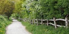 Cobham, Kent (Cymbidium Clarisse) Tags: cuxton circular kent countryside walk swcwalks swcwalk173 spring fence cobham