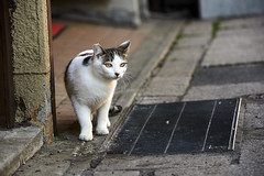 cat (NEKOFighter) Tags: cat neko nikon japan straycat ねこ 猫 大分 別府 商店街