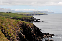 Falaises prs de Dingle. (teocaramel) Tags: nature dingle vert eire paysage falaise irlande le sauvage ocan paturage