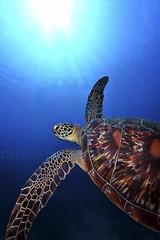 2012 10 METTRA OCEAN INDIEN 2358