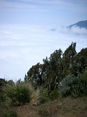 (hopekinney) Tags: tanzania mountainclimbing adventure exploration abovetheclouds naturephotography eastafrica mountmeru cloudgazing