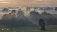 Southern Winter (Miss Basil85) Tags: morning trees winter newzealand mist fog landscape waikato northisland teawamutu blinkagain bestofblinkwinners blinksuperstars blink4gallery
