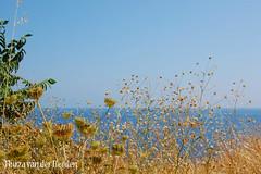 Aan de kust bij Agay (Thirza78) Tags: travel france nikon zee frankrijk agay somethingblue zuidfrankrijk middellandsezee
