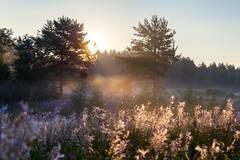 morning light (art-dara) Tags: morning light grass fog forest dawn russia dara              darapilugina darapilyugina