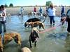 GreyhoundPlanetDaySept132009027