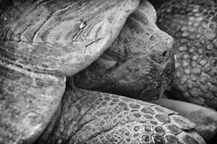 (Bonny van Straten) Tags: city blackandwhite oktober fall animal animals zoo blackwhite nikon october schildpad zwartwit turtle herfst streetphotography antwerp dieren antwerpen stad dierentuin d300 2013 nikond300