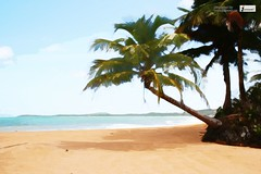 Palm trees tropical beach (Infoway LLC - Website Development Company) Tags: wallpaper beautiful wonderful nice superb awesome images exotic watercolour hd incredible breathtaking classy mindblowing blacksandbeach paradisebeach whitesandybeach summerwallpaper waterviewhouse responsivewebsitedesign twopalmsoverthebeach responsivewebdesigncompany oceanlandscapesbeach sandybeacheswithpalmtrees palmtreestropicalbeach youngpalmtree coconutpalmbeach tropicalbeachwithpalm