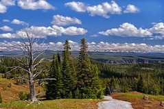 Fresh Air (Phil's Pixels) Tags: nature landscape freshair explore yellowstonenationalpark wyoming dunravenpass
