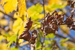 IMG_5579 (gianni.giacometti) Tags: italia natura friuli reana rojale