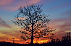 Sunset in November (MaiGoede) Tags: abendstimmung sunset fedderwardersiel cmatthiasihriggoede ringexcellence dblringexcellence tplringexcellence golden landscape landschaft