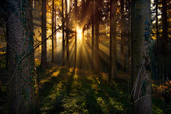 Another Enchanted Forest (pgpaulagonzalez) Tags: wood trees light red sun green forest glow foliage creation processing sunburst rays sunrays effect enchanted orton enlightened lightrays rland 500px d7100 ifttt