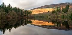 reflection #2 (sidewaysbob) Tags: 2 reflection water scotland heather trossachs pineforest benard lochard