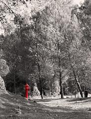 Voglio fare il pompiere (Ondablv) Tags: trees portrait italy parco verde green nature alberi canon photography eos photo italia foto image photos wildlife postcard tag natura images postcards acqua piante rosso incendio sicilia bosco eucalipto immagine naturelovers woodgreen immagini pompieri vegetazione pompiere idrante boschi 70d idranti eucalipti ondablv canoneos70d canon70d eos70d