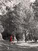 Voglio fare il pompiere (Ondablv) Tags: sicilia idrante idranti rosso bosco pompieri pompiere acqua incendio alberi eucalipto eucalipti boschi parco portrait piante green naturelovers ondablv verde vegetazione woodgreen trees