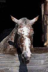 Affacciato (Semeyaza) Tags: horse animal animals natura cavalli cavallo animali