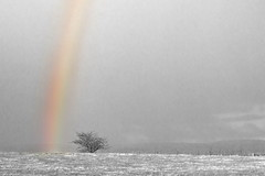 The rainbow, and beyond the visible spectrum (Pog's pix) Tags: winter storm tree scotland rainbow infrared layers lonetree kilmacolm landcape inverclyde bridgeofweir colourpop knappsloch