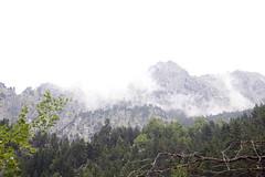 Beech forest Aguas Limpias (Spain) - Hayedo de Aguas Limpias (España) (ipomar47) Tags: españa rio forest river spain huesca grove bosque aragon gran aguas beech aragones haya pirineo gr11 recorrido hayedo limpias