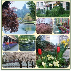 April in Vancouver (FernShade) Tags: flowers canada nature vancouver landscape scenery cityscape britishcolumbia scenic urbannature pacificnorthwest cherryblossom westcoast springtime aprilflowers springscenery