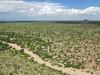 Gadsden Purchase landscape. (Tim Kiser) Tags: 2015 20151006 arizona arizonalandscape carnegiea carnegieagigantea img6807 october october2015 pimacounty pimacountyarizona saguaronationalpark saguaronationalparkwest saguaronationalparklandscape saguaroparkwest suspicnicarea tucsonmountaindistrict tucsonmountaindistrictlandscape tucsonmountaindistrictofsaguaronationalpark tucsonmetropolitanarea cactus desert desertlandscape desertplants desertwash drystream drystreambed ephemeralstream expanse expanseofdesert expansiveview landscape nationalpark nationalparklandscape park partlycloudy saguaro saguaroforest saguarolandscape saguaros southarizona southeastarizona southeasternarizona southernarizona view viewfromahill wash tucson unitedstates us