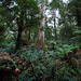 In the heart of the forest (Maruša Žerjal) Tags: australia green plants tree nature rainforest