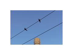 30400321 (ufuk tozelik) Tags: ufuktozelik pipe birds pigeon animal tower bricks wires electric diagonal looking