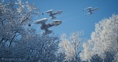 Warbird Migration Vol.2 (Avanaut) Tags: snow cold winter sunshine ywingfighter starwars originality avanaut scalemodel miniature bluesky