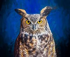 Portrait of a Great Horned Owl (Wes Iversen) Tags: bubovirginianus greathornedowl hss howell howellnaturecenter michigan nikkor18300mm sliderssunday bird nature owls painterly