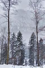 bavaria II (Pavel Legenkov) Tags: germany bavaria winter forest hill mountain lake königssee trip wander tree white