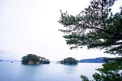 Matsu (akituki**) Tags: japan miyagi sendai matsushima matsu pine tree sea sky island trees 宮城 仙台 松島