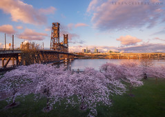 Steel Bridge (terenceleezy) Tags: pdx portland oregon cherryblossoms blossoms sakura shotoniphone7