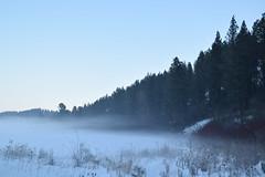 Union Flat Valley  - Klemgard Park (WilBDow) Tags: valley winter fog forest klemgard park brutal palouse red bushes grassland