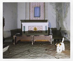 My friend Urbex! #urbex #urbexitalia #straneombre #ghost (Mauro Moriconi) Tags: abbandono chiesa jackrussell paranormal ghost urbex instagramapp square squareformat iphoneography lark