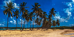 Palm trees (ЈΘŠΞПΔ72 ) Tags: josema72 rd dominicanrepublic palmeras palms palmtree beach playa macaobeach