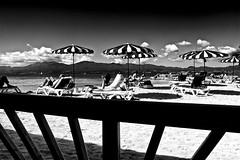 La belle vie !!! (Patevy Damant) Tags: antilles bw caraïbes extérieur groupe guadeloupe jour monochrome nb olympus paysage plage
