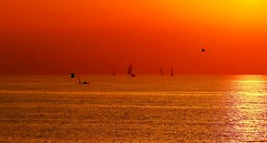 Sailing & flying at sunset - Tel-Aviv beach (Lior. L) Tags: sailingflyingatsunsettelavivbeach sailing flying sunset telaviv beach sailboats birds reflections sea seascapes travel telavivbeach silhouettes