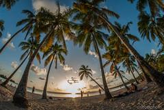DSC_1162 (Ciscobolo) Tags: martinica martinicahd wonderfulworld martinique sunset beach paradise palms sea caribbean magiclight ciscophoto clouds eden nature